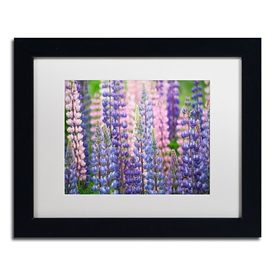 Trademark Fine Art Cora Niele Blue Pink Lupine Flowers 11 x 14 Matted Framed (190836247363)