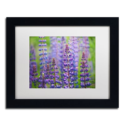 Trademark Fine Art Cora Niele Blue Lupine Flowers 11 x 14 Matted Framed (190836246946)