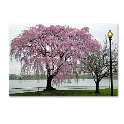 Trademark Fine Art CATeyes Cherry Tree 12 x 19 Canvas Stretched (190836098200)