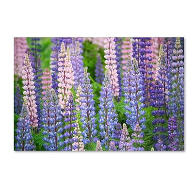 Trademark Fine Art Cora Niele Blue Pink Lupine Field 12 x 19 Canvas Stretched (190836247103)