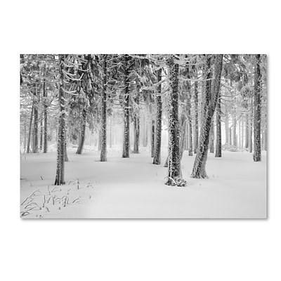 Trademark Fine Art Philippe Sainte-Laudy Frozen World 12 x 19 Canvas Stretched (190836122066)
