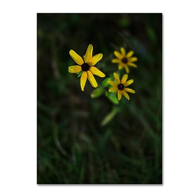 Trademark Fine Art Kurt Shaffer Brown-Eyed Susan 14 x 19 Canvas Stretched (190836005437)