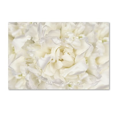 Trademark Fine Art Cora Niele White Peony Flower 12 x 19 Canvas Stretched (190836311064)