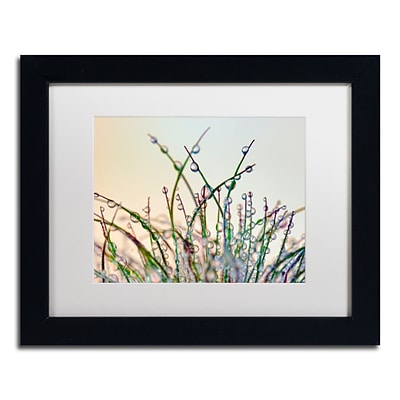Trademark Fine Art Cora Niele Dewy Grass 11 x 14 Matted Framed (190836251889)