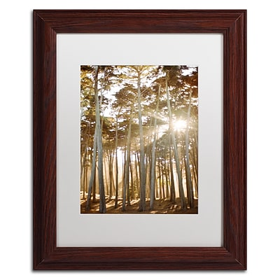 Trademark Fine Art Ariane Moshayedi Presidio Sunset Trees 11 x 14 Matted Framed (190836273768)