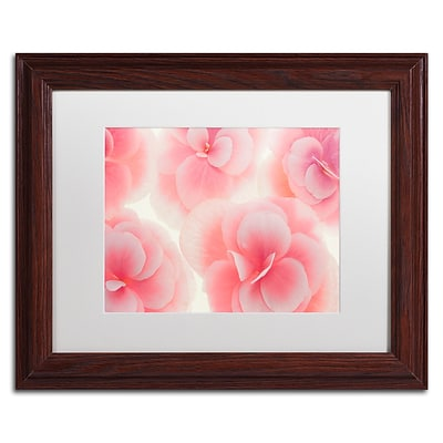 Trademark Fine Art Cora Niele Rose Begonia Flowers 11 x 14 Matted Framed (190836309061)