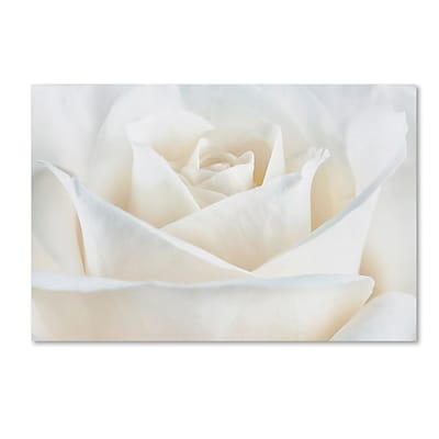 Trademark Fine Art Cora Niele Pure White Rose 16 x 24 Canvas Stretched (190836308699)