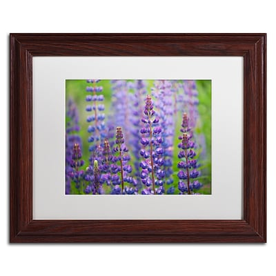 Trademark Fine Art Cora Niele Blue Lupine Flowers 11 x 14 Matted Framed (190836247066)