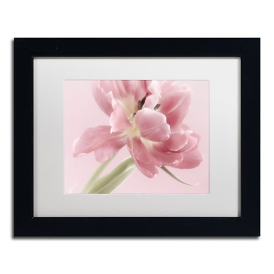 Trademark Fine Art Cora Niele Soft Pink Tulip 11 x 14 Matted Framed (190836309504)