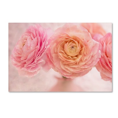 Trademark Fine Art Cora Niele Pink Persian Buttercup Bouquet 12 x 19 Canvas Stretched (190836259663)