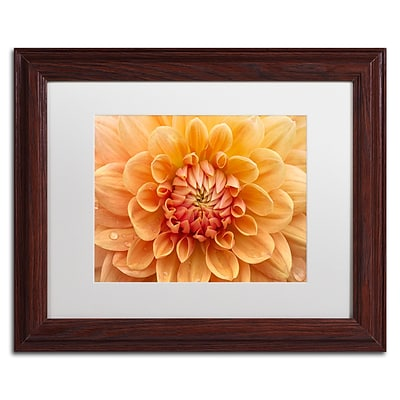 Trademark Fine Art Cora Niele Orange Dahlia 11 x 14 Matted Framed (190836248322)