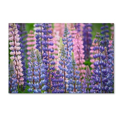 Trademark Fine Art Cora Niele Blue Pink Lupine Flowers 12 x 19 Canvas Stretched (190836247387)