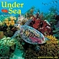 "2018 Willow Creek Press 12"" x 12"" Under the Sea Wall Calendar (46297)"