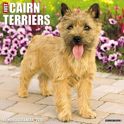 2018 Willow Creek Press 12 x 12 Cairn Terriers Wall Calendar (44354)