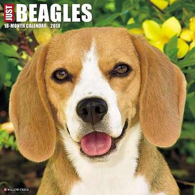 2018 Willow Creek Press 12 x 12 Beagles Wall Calendar (44125)