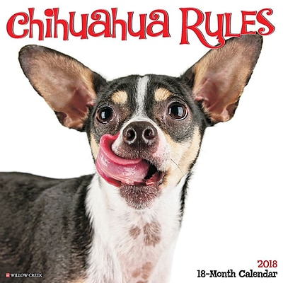 2018 Willow Creek Press 12 x 12 Chihuahua Rules Wall Calendar (44484)