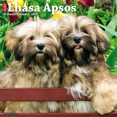 2018 Willow Creek Press 12 x 12 Lhasa Apsos Wall Calendar (45436)