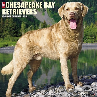 2018 Willow Creek Press 12 x 12 Chesapeake Bay Retrievers Wall Calendar (44460)