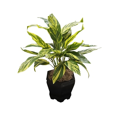Nearly Natural 6789 Ginger Plant with Black Planter Green & Black